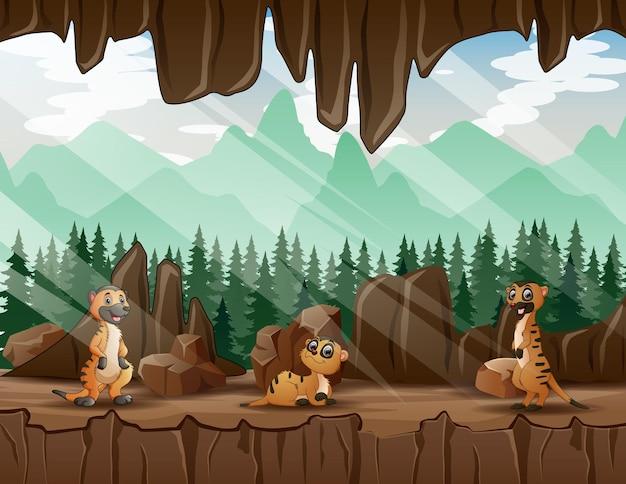 洞窟の入り口にある3匹のミーアキャットの漫画イラスト Premiumベクター
