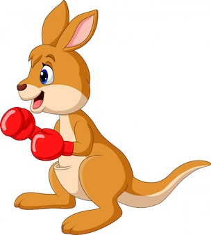Cartoon kangaroo boxing isolated on white background