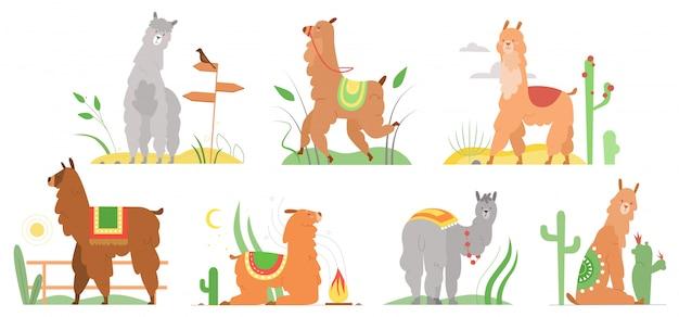 漫画ラマフラットイラスト。かわいいラマアルパカのキャラクターは、サボテンのいるペルーの砂漠の風景で、笑顔で、歩いて、ジャンプして、寝ています。白で隔離メキシコ面白いラマ動物コレクション