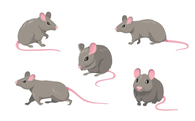 漫画のマウスセット。ピンクの無毛の尾が白で隔離されて歩いたり座ったりしている灰色の毛皮のような齧歯動物の小さなラット