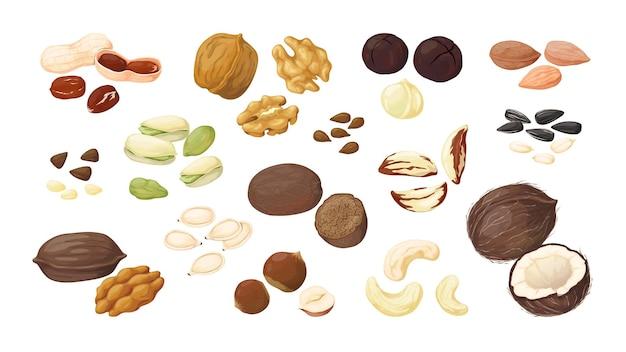 Мультяшные орехи. миндаль, арахис, грецкий орех, фундук, фисташки, макадамия, пекан, лен, кокос, подсолнечник, тыква, плоские подробные семена и орехи, векторный набор. отдельные иллюстрации очищенных семян на белом фоне