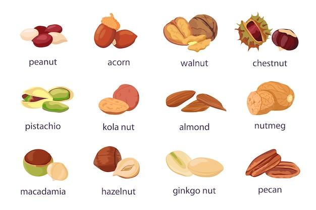 만화 견과류입니다. 호두, 헤이즐넛, 피스타치오, 땅콩 아이콘. 건강한 유기농 아몬드, 도토리, 은행나무, 콜라 너트. 식품 천연 스낵 벡터 세트