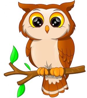 Cartoon owl bird
