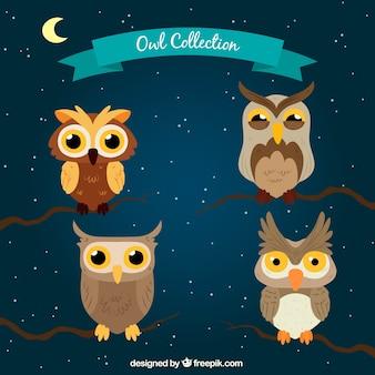Cartoon owl collection at night