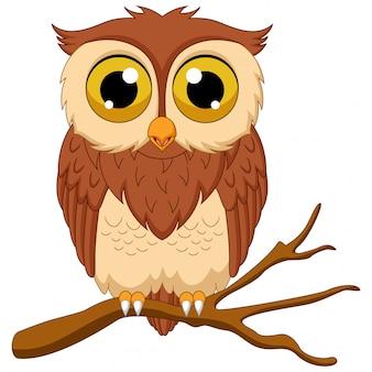 Cartoon owl isolated on white