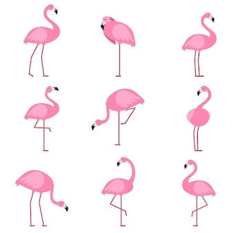 Cartoon pictures of exotic pink bird flamingo
