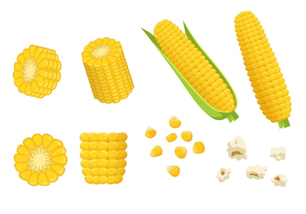Cartoon pieces of corn illustrations set