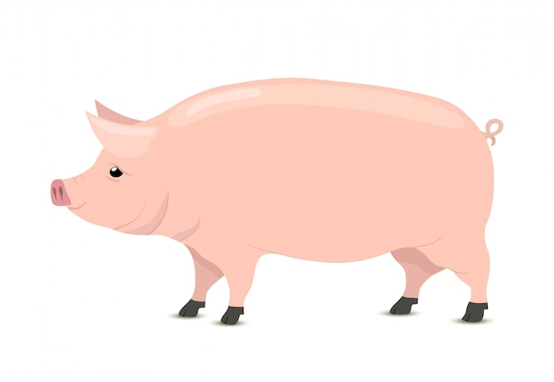 Cartoon pig, animal for butchery, meat shop