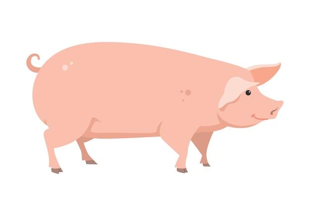 Cartoon pig, vector