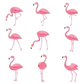 Cartoon pink flamingo vector set. cute flamingos collection