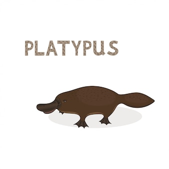 Cartoon platypus isolated on a white background