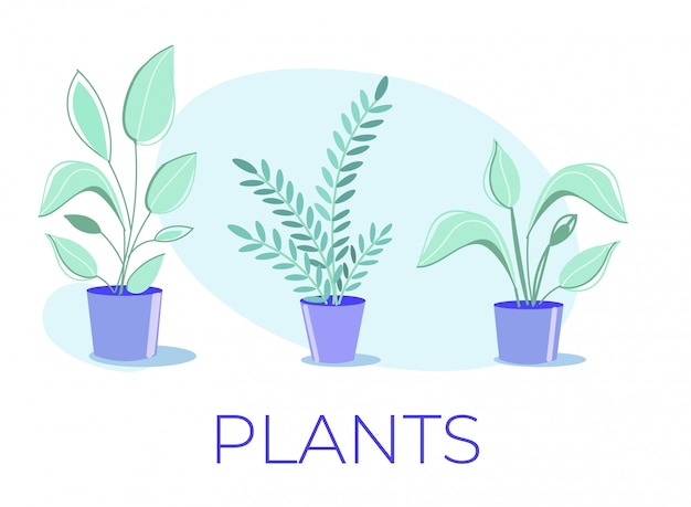 Cartoon poster with potted house plants collection