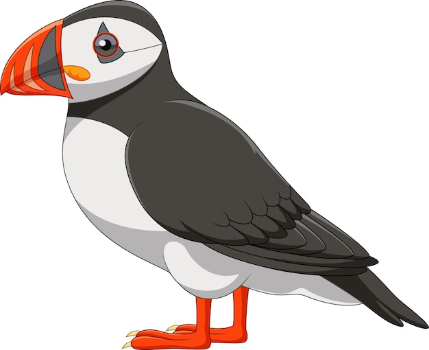Cartoon puffin isolated on white background