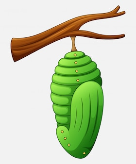 Cartoon pupa of the butterfly