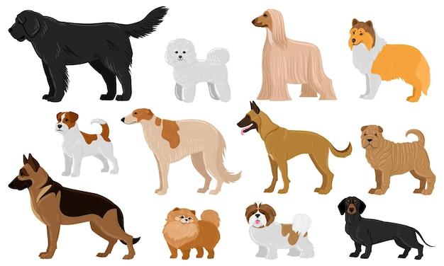 만화 강아지는 애완 동물 귀여운 캐릭터를 낳습니다. 닥스훈트, 셰퍼드, 말리노이, 잭 러셀 테리어 벡터 일러스트레이션 세트. 국내 콜리와 샤페이 개