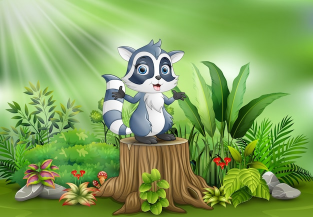 Cartoon a raccoon standing on tree stump with green plants