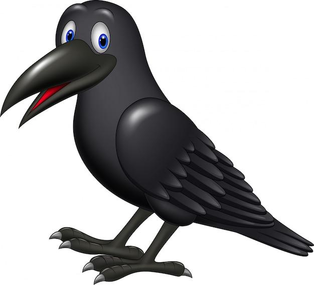 Cartoon raven isolated on white background