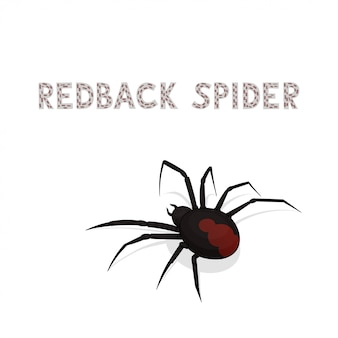 Cartoon redback spider isolated on white background.