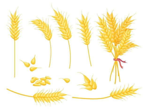 Мультфильм спелых золотых растений пшеницы, зерна и уха. желтый одиночный колоск, букет и семя. набор сельскохозяйственных культур, хлебобулочных и сельскохозяйственных символ вектор. иллюстрация зерна пшеницы, золотого семени