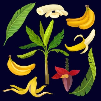 Cartoon set of sweet yellow bananas, green leaves and palm tree. colorful tropical fruit icons.