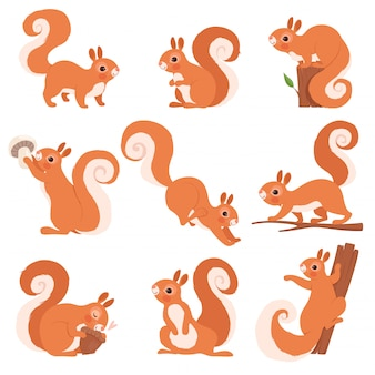 Cartoon squirrel. funny forest wild animals running standing and jumping squirrel clip art collection