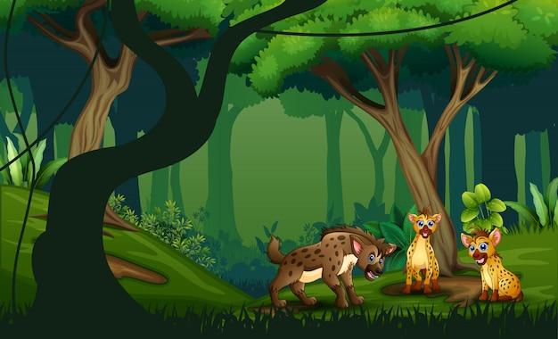 熱帯のジャングルの熱帯雨林で3つのハイエナを漫画します。