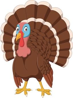 Cartoon turkey on white background