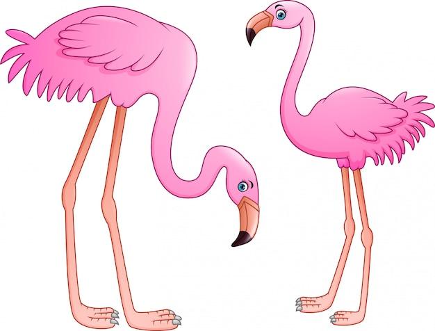Cartoon two pink flamingo on white background