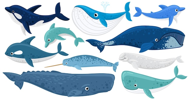 Cartoon underwater mammals, dolphin, beluga whale, orca whale. marine animals, humpback whale, narwhal, killer whale vector illustration set. underwater fauna whales. marine beluga and animal aquatic