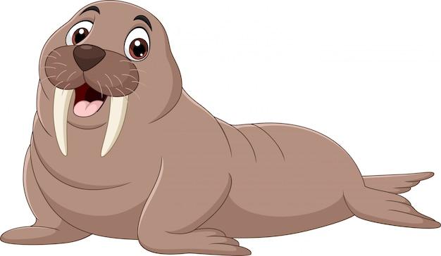 Cartoon walrus isolated on white background