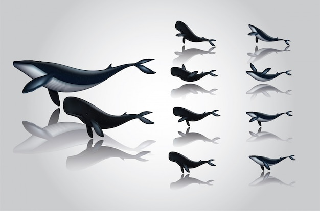Cartoon whale dresses swimming various styles.