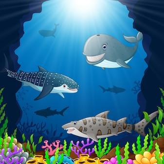 Мультяшный кит под морем