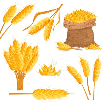 Cartoon wheat  isolated set