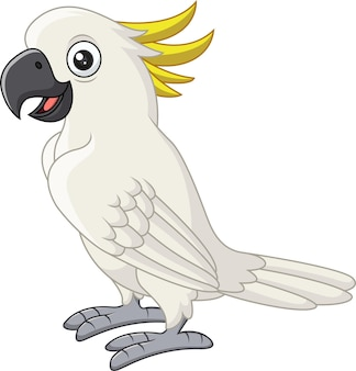 Cartoon white cockatoo on white