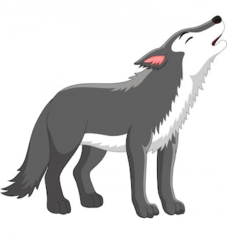 Cartoon wolf howling on white