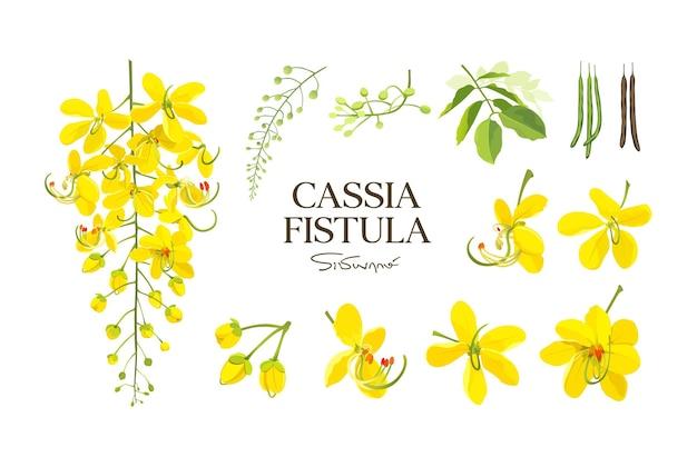 Цветок фистулы кассии, национальный цветок таиланда.