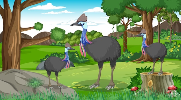 Cassowaries family in forest or tropical forest at daytime scene