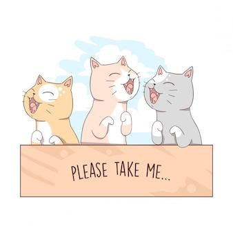 Cat babby cute in box