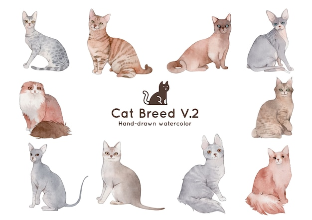 Cat breed watercolor illustration