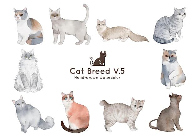 Cat breed watercolor illustration