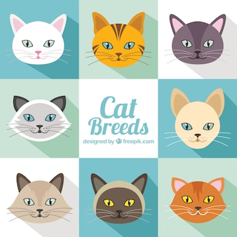 Cat breeds pack in flat design