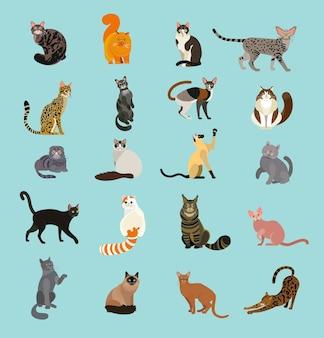 Плакат о породах кошек. кошки мира. коллекция пород кошек. иллюстрация.