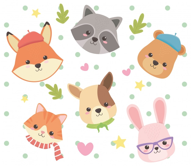 Cat fox raccoon bear dog and rabbit