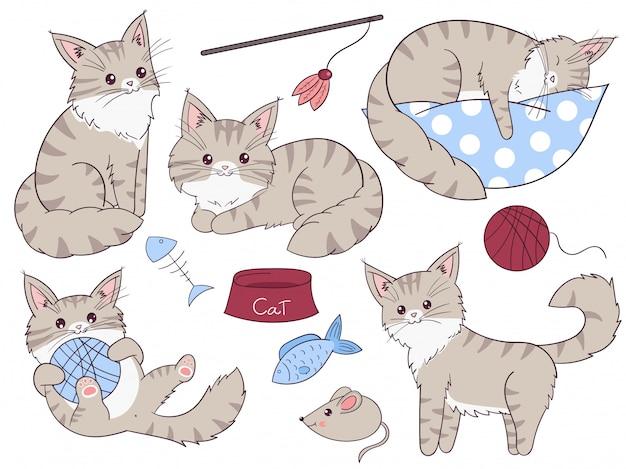 Cat maine coon cartoon set. hand drawn vector illustration.