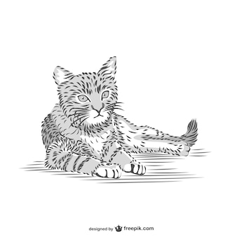 Cat disegno vettoriale