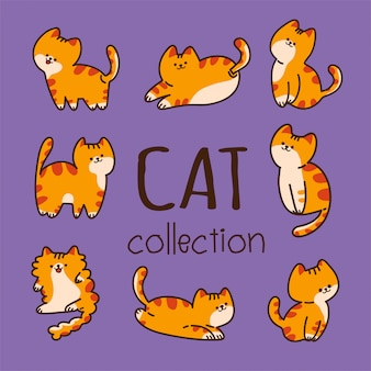 Cat set on purple