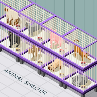 Cat shelter isometric