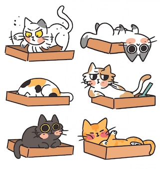 고양이 새끼 고양이와 그들의 쓰레기통