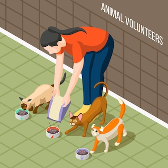Cats volunteer isometric