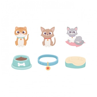Cats with collar cushion food bowl, pets